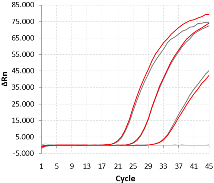 Fig. 1. MTplex qPCR-test by dispensing ordinary mix (grey) and, curves obtained with Monodose qPCR-Test (red)